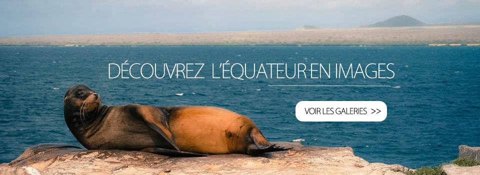4-Phoque-galapagos-tout-equateur