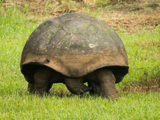 Rancho-Primiscias-Tortues-géantes-galapagos-tout-equateur