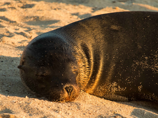 playa-mann-lion-de-mer-galapagos-tout-equateur