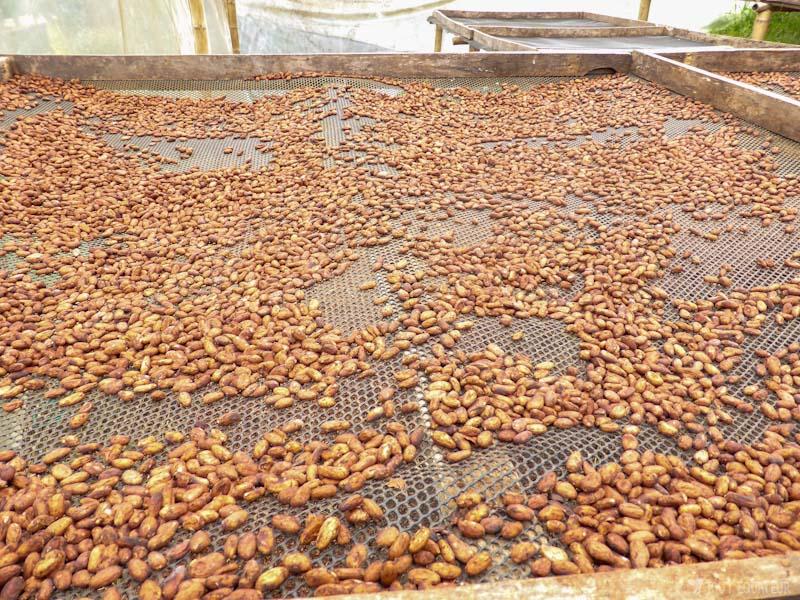 cacao-mindo-tout-equateur
