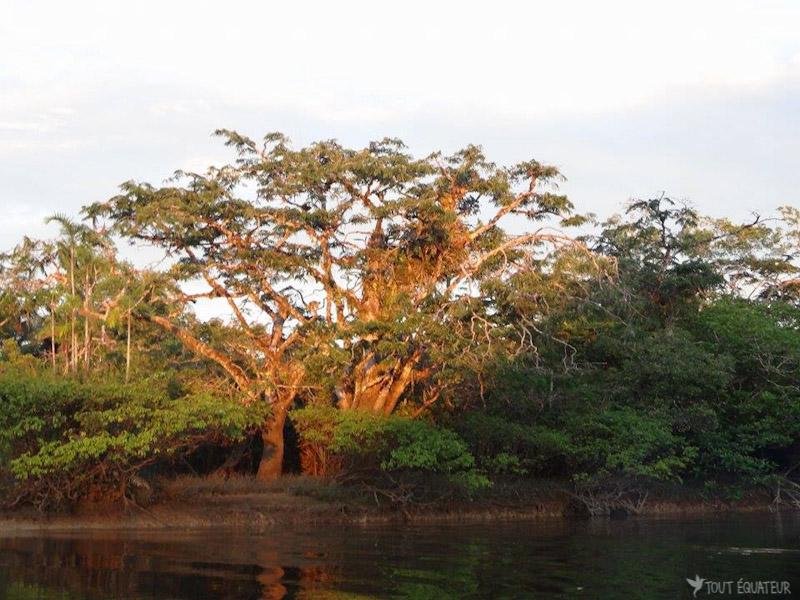 coucher-de-soleil-cuyabeno-tout-equateur