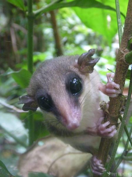 petit-mamifère-cuyabeno-tout-equateur
