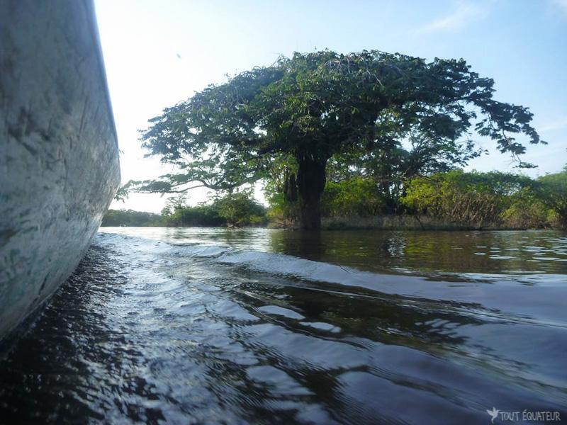 pirogue-arbre-riviere-cuyabeno-tout-equateur