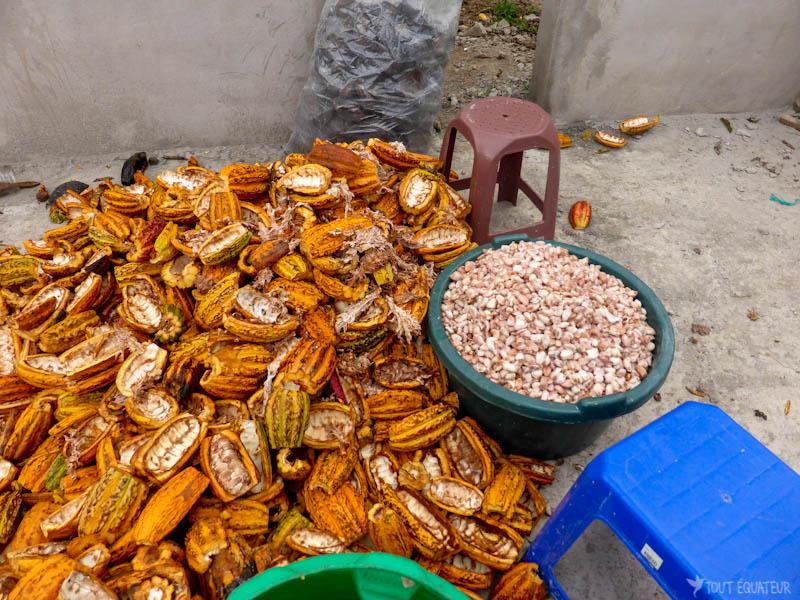 tour-chocolat-mindo-tout-equateur