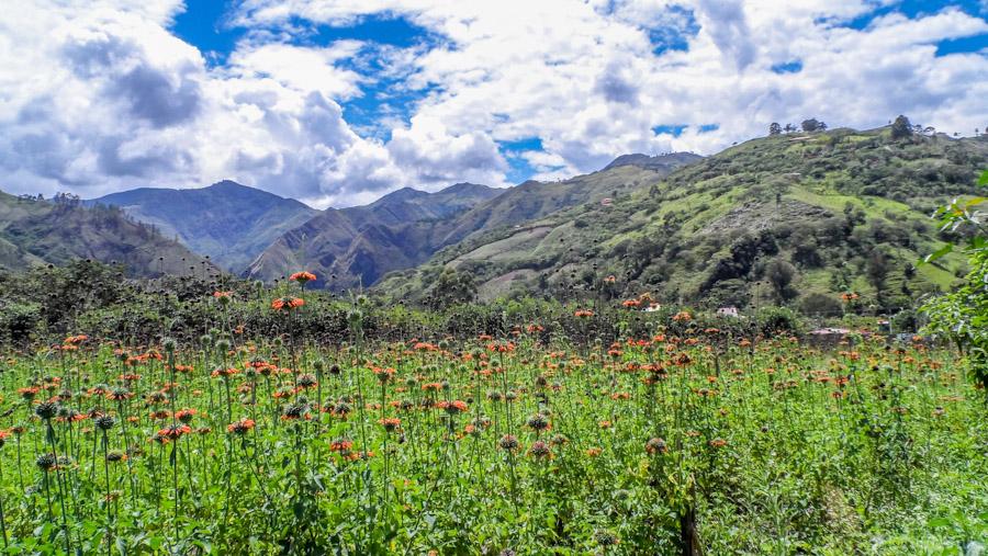 2014-12 - Equateur Vilcabamba-tout-equateur-tout-equateur (2)