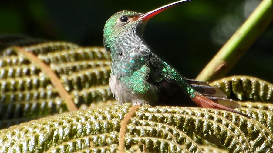 12-colibri-mindo-tout-équateur