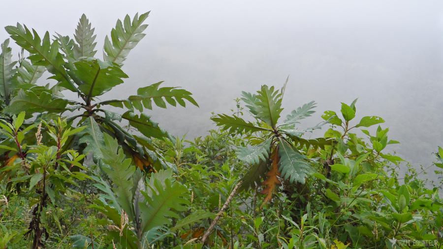 8-plantes-route--tout-équateur