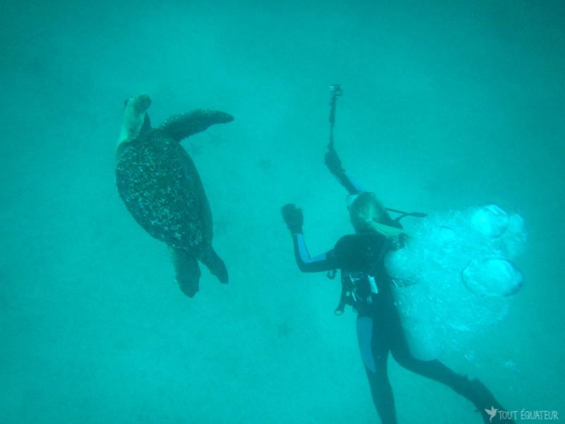 go-pro-tortue-de-mer-galapagos-tout-équateur
