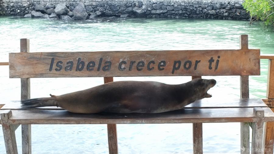 isabela-galapagos-tout-équateur