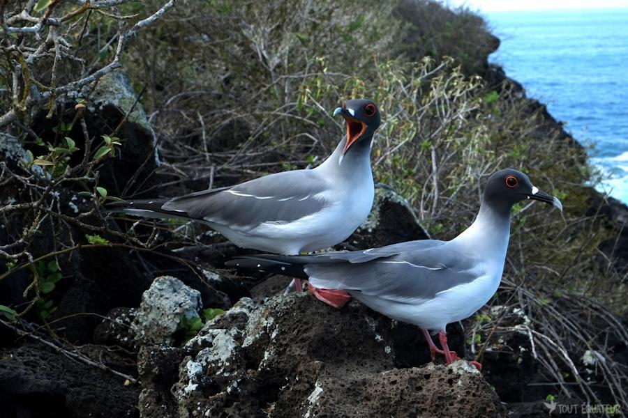 oiseaux-galapagos-tout-équateur