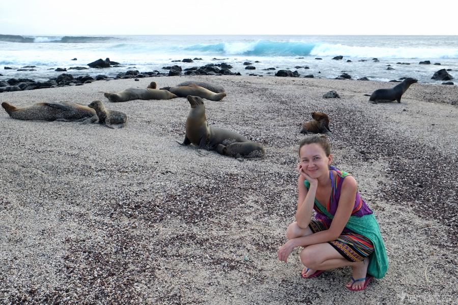 plage-lion-de-mer-galapagos-tout-équateur