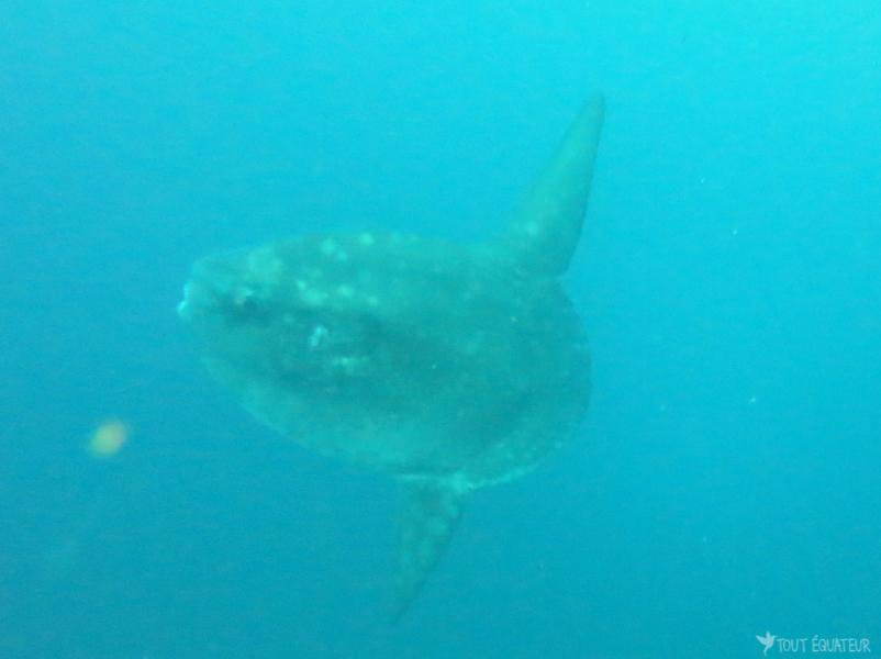 poisson-lune-galapagos-tout-équateur