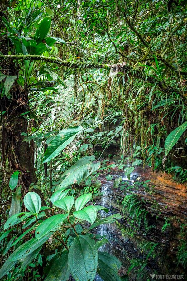 article-visiter-amazonie-tout-equateur-5