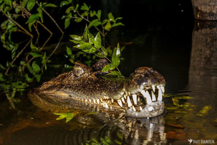 article-visiter-amazonie-tout-equateur-8