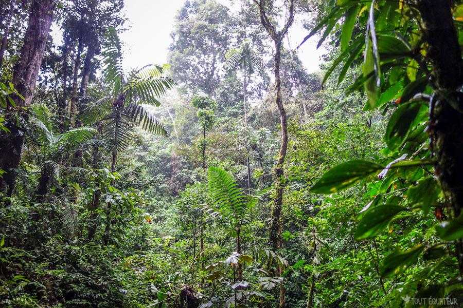 voyager en amazonie en equateur  2018