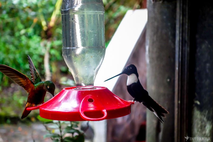 blog-amazonie-tout-equateur-3