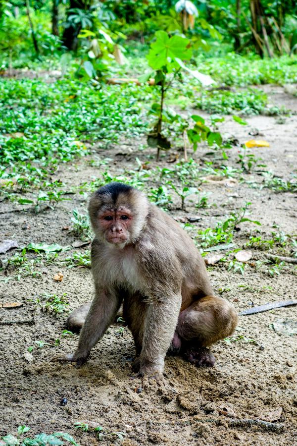 blog-amazonie-tout-equateur-9