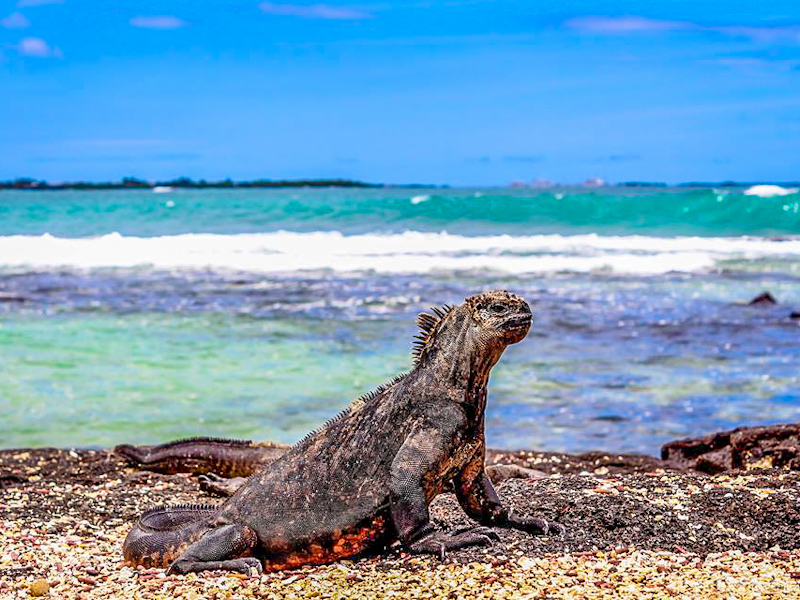article-voyager-Galapagos-tout-equateur-12
