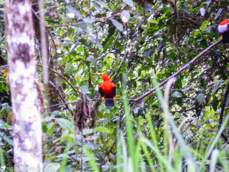 blog-traversée-tout-equateur (14 of 24)