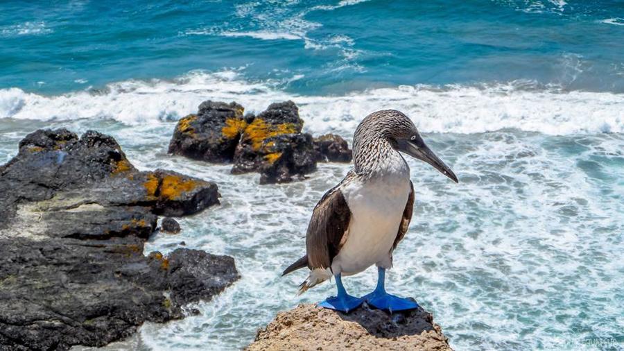 Aller-aux-Galápagos-tout-equateur (1 of 8)