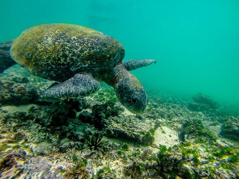 Aller-aux-Galápagos-tout-equateur (5 of 8)