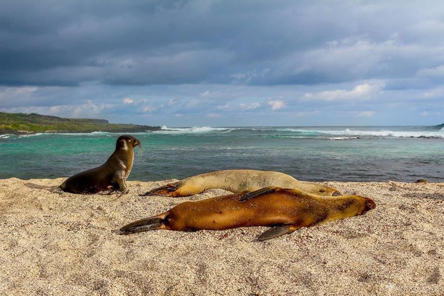 Aller-aux-Galápagos-tout-equateur (7 of 8)