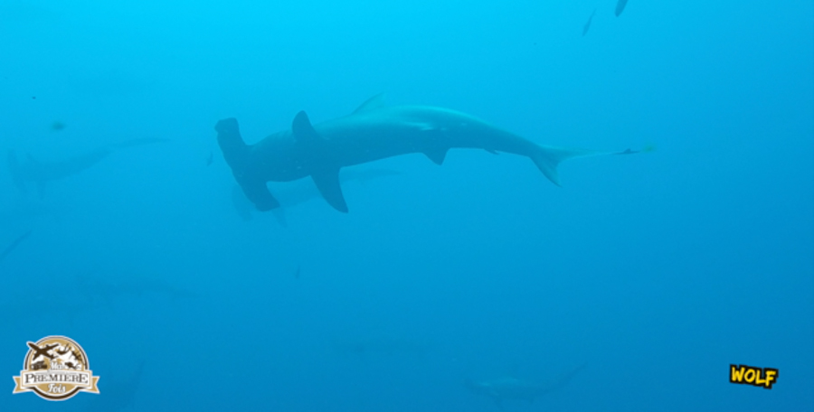 blog-plongée-Galápagos-tout-equateur (1 of 6)