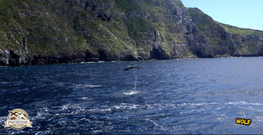 blog-plongée-Galápagos-tout-equateur (2 of 6)