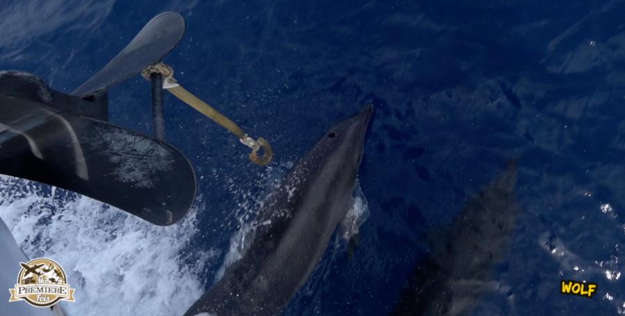 blog-plongée-Galápagos-tout-equateur (3 of 6)