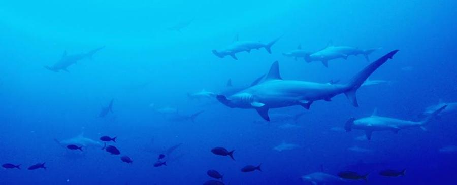 blog-plongée-Galápagos-tout-equateur (4 of 6)