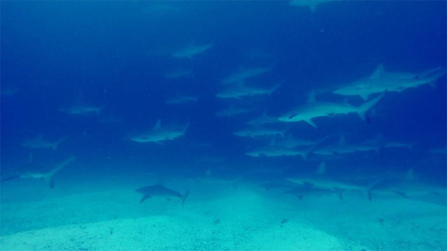 blog-plongée-Galápagos-tout-equateur (6 of 6)