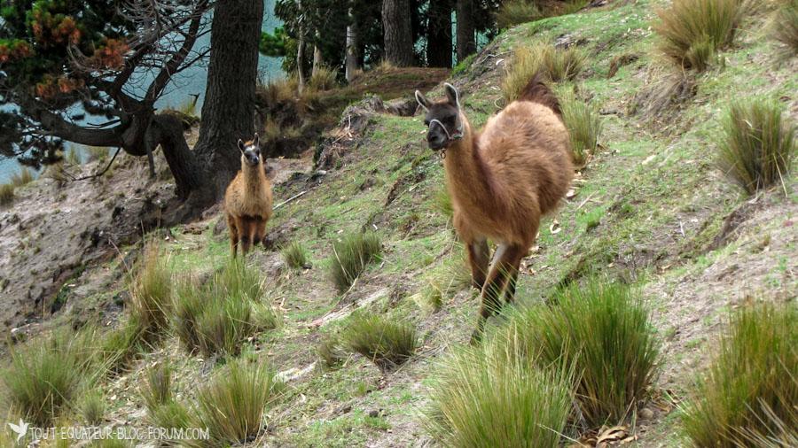 blog-boucle-du-quilotoa-tout-equateur-25