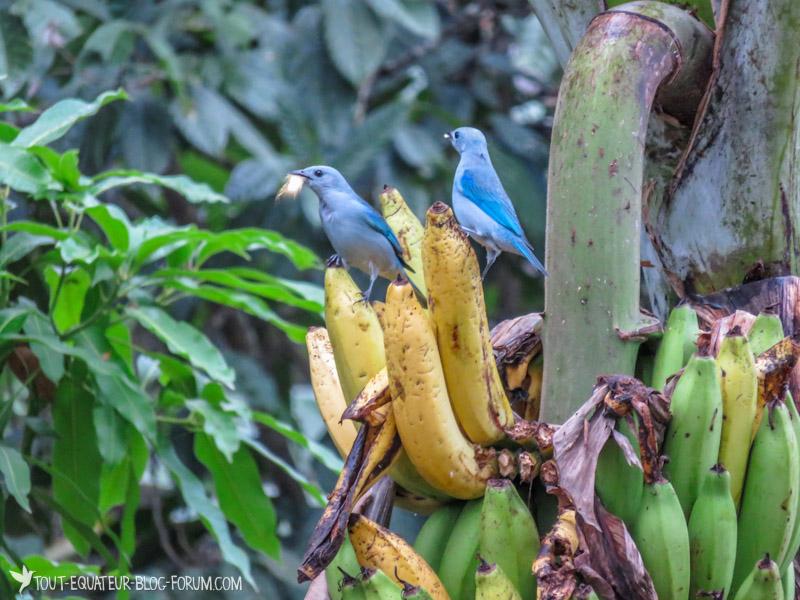 blog-marche-otavalo-tout-equateur-19