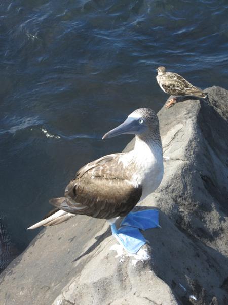 blog-galapagos2-tout-equateur (4 of 5)