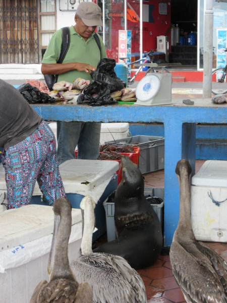 blog-galapagos3-tout-equateur (3 of 7)