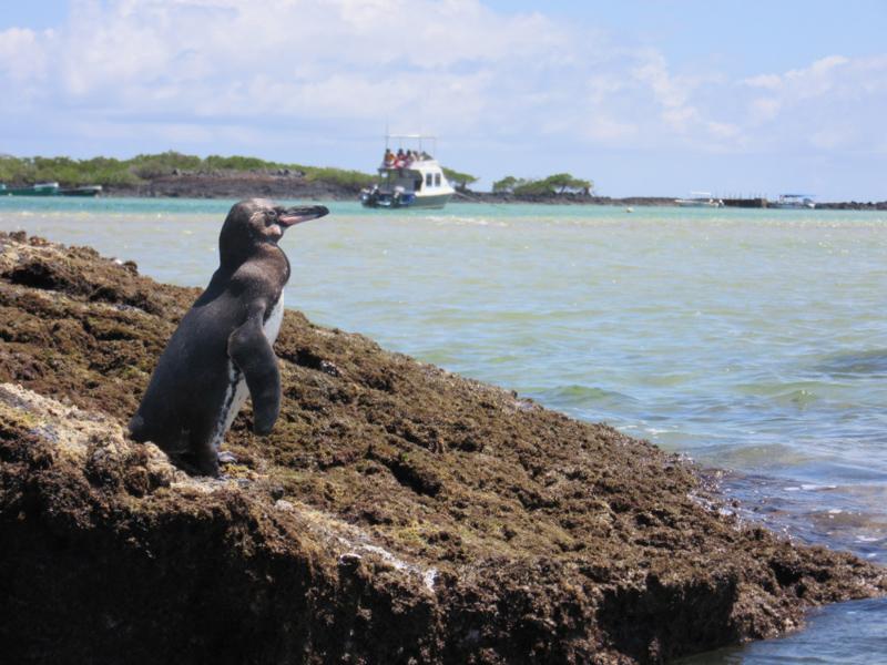 blog-galapagos4-tout-equateur (2 of 5)