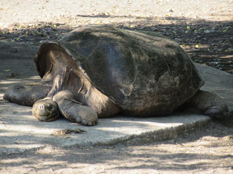 blog-galapagos4-tout-equateur (3 of 5)