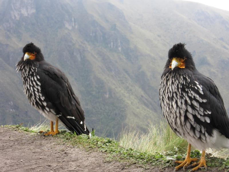 blog-Quito-JPF-tout-equateur (13 of 17)