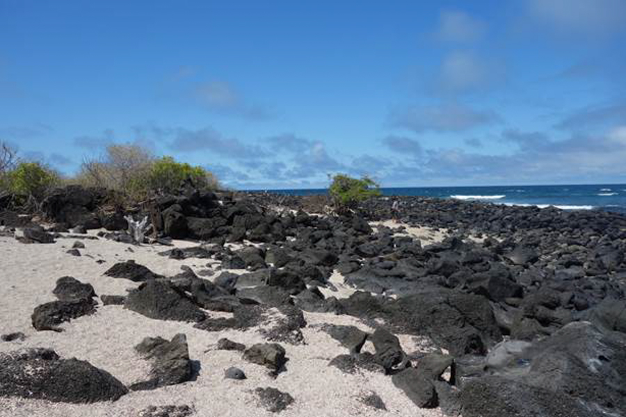 blog-galapagos-chapiteam-tout-equateur (1 of 19)
