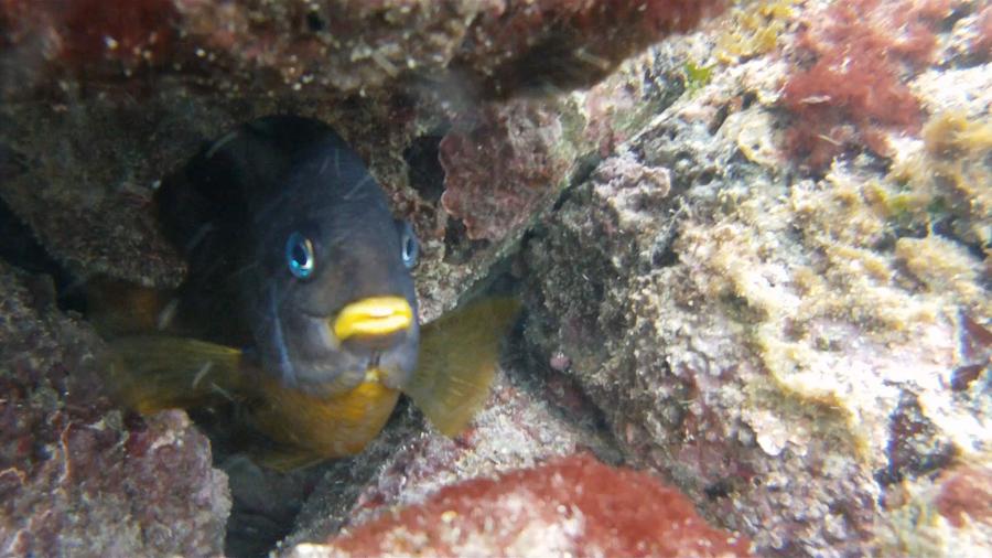 blog-galapagos-chapiteam-tout-equateur (10 of 19)