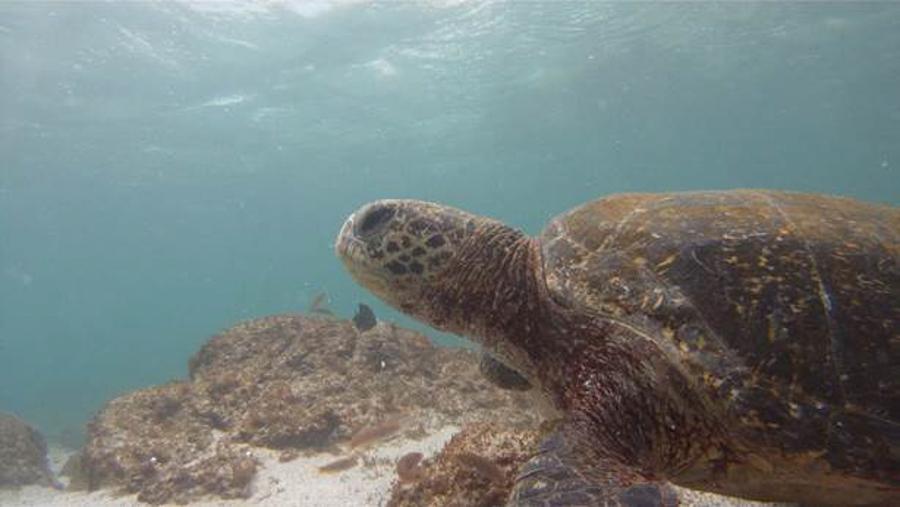 blog-galapagos-chapiteam-tout-equateur (14 of 19)