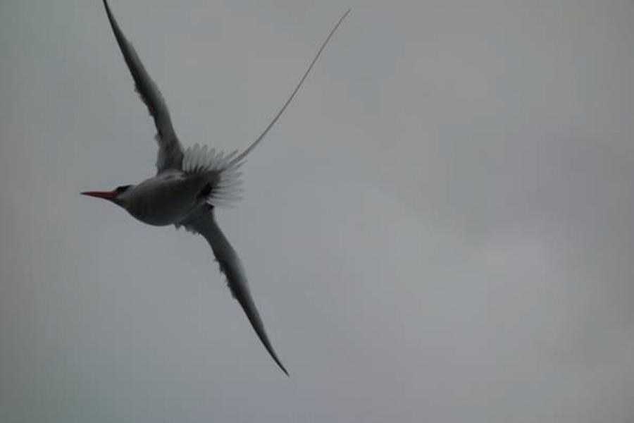 blog-galapagos-chapiteam-tout-equateur (15 of 19)