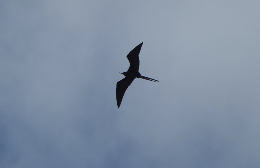blog-galapagos-chapiteam-tout-equateur (16 of 19)