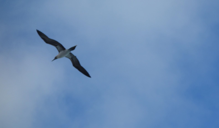 blog-galapagos-chapiteam-tout-equateur (17 of 19)