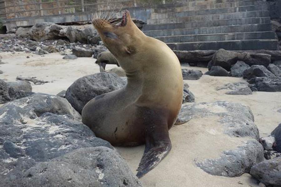 blog-galapagos-chapiteam-tout-equateur (2 of 19)