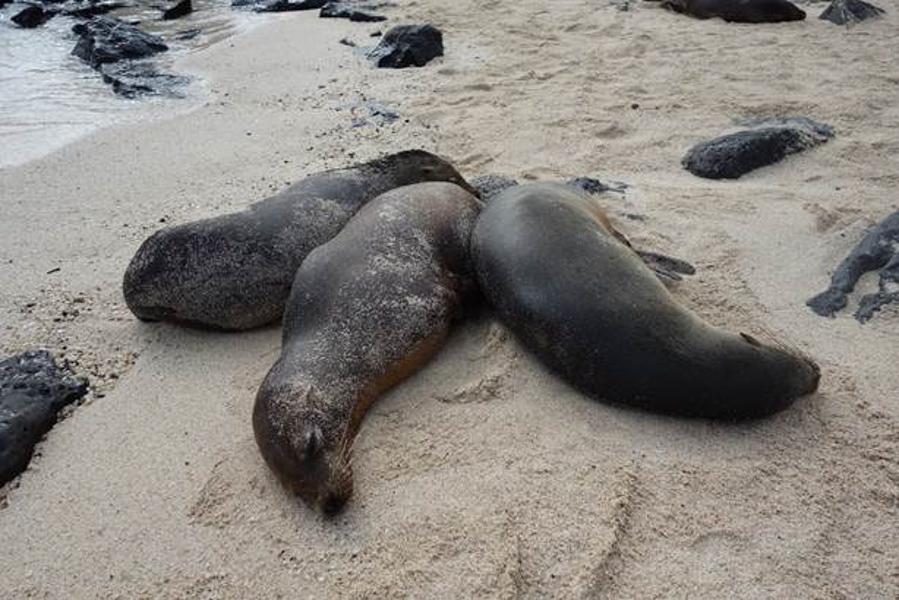 blog-galapagos-chapiteam-tout-equateur (3 of 19)