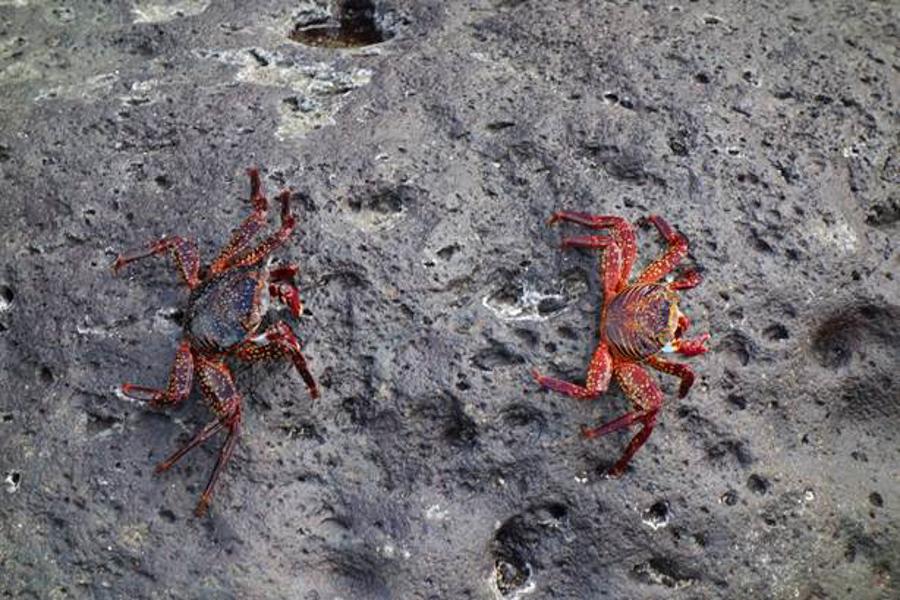 blog-galapagos-chapiteam-tout-equateur (4 of 19)