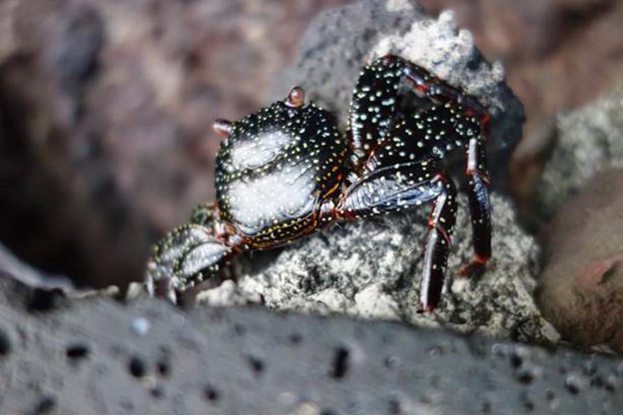 blog-galapagos-chapiteam-tout-equateur (5 of 19)