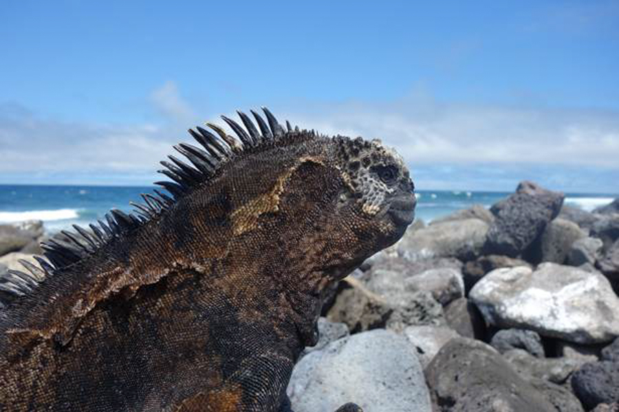 blog-galapagos-chapiteam-tout-equateur (7 of 19)