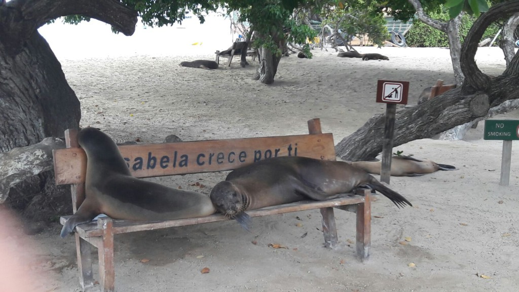 Isabela Galapagos Otarie - Valerie Florval